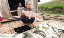 Cá tại vùng biển Thanh Hóa chết không phải do dịch bệnh