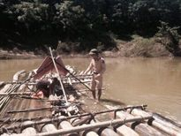 Nghệ An: Bắt vụ vận chuyển gỗ lậu trên sông tuyến sông Hiếu
