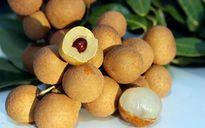 Thị trường Malaysia đón nhận quả nhãn Việt Nam
