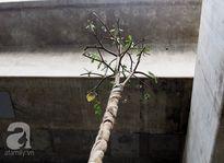 """Người dân Hà Nội bất ngờ thấy cây """"lạ"""" được trồng ngay dưới dầm bê tông đường sắt trên cao"""