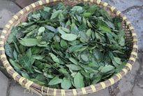 3 bước tự làm bột trà xanh đắp mặt trị mụn, trắng da từ lá chè xanh