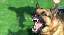 Nghệ An: Nhiều người tử vong do chó dại cắn