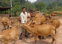 Thủ tướng: Điện Biên cần coi xóa đói giảm nghèo tiếp tục là nhiệm vụ chính trị...