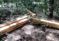 Bắt nhóm đối tượng khai thác gỗ rừng trái phép trong khu bảo tồn
