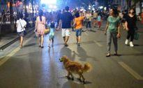 Dắt chó đi dạo ở hồ Hoàn Kiếm bị phạt bao nhiêu tiền?