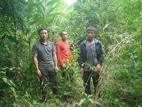 Tây Nguyên: Cả làng đi phá rừng, phải xử lý kiểu gì?