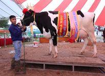 Cty CP Giống bò sữa Mộc Châu: Niềm vui nhân đôi