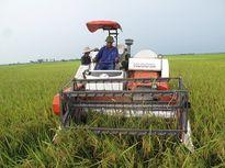 Học sinh được nghỉ học để giúp gia đình gặt lúa, chạy bão số 7