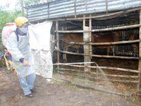 Cục Thú y yêu cầu chủ động ứng phó dịch bệnh cho vật nuôi sau mưa lũ