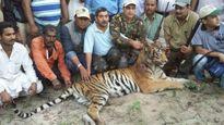 Hổ dữ tấn công 7 người thương vong