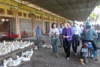 Thứ trưởng Y tế Hoa Kỳ Mary Wakefield thăm chợ đầu mối gia cầm Hà Vỹ