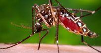 Nóng: Phát hiện 1 trường hợp nhiễm Zika đầu tiên tại Long An