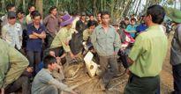 Phó Thủ tướng yêu cầu điều tra vụ 3 bảo vệ rừng bị bắn chết