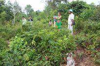 Lạng Sơn: Cần làm rõ việc hủy hoại tài sản của người dân