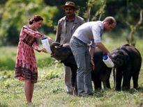 Hoàng tử Anh William sẽ đến Việt Nam một mình