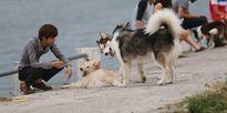 Không chỉ riêng phố đi bộ, chó không rọ mõm vẫn tung tăng ở nhiều nơi khác