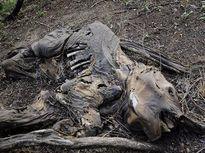 Trái đất có thể mất 2/3 số động vật trong 4 năm tới