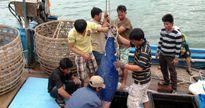 Liên kết doanh nghiệp và ngư dân làm tăng giá trị cá ngừ đại dương