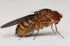 10 điều thú vị về tình dục giữa các loài khác nhau 28 Tết