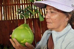 Trái cây 'độc' tiền triệu tìm đỏ mắt không có ở miền Tây