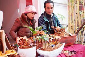 Độc đáo thú chơi bonsai làm từ nấm linh chi