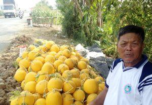 Nông dân Đồng Chó Ngáp trồng dưa hấu Tết thu lãi cao