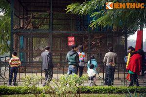 Đầu năm Khỉ, xem khỉ làm... trò khỉ ở Hà Nội