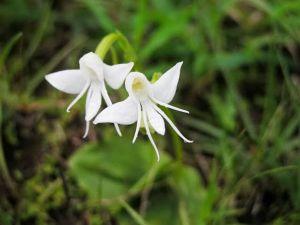 Mê mệt với vẻ đẹp của những loài hoa mang dáng hình động vật