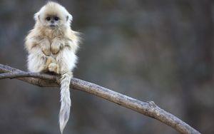 Mê mẩn ngắm ảnh loài khỉ cực dễ thương