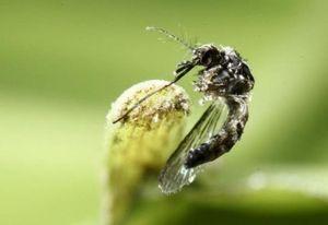 Trung Quốc phát hiện ca nhiễm Zika đầu tiên