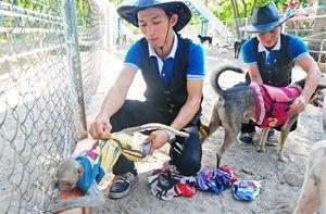 Khỉ ngồi trên lưng chó chạy đua độc đáo ở Nha Trang