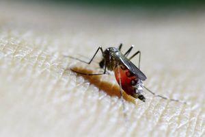 Virus Zika đe dọa sao Barcelona
