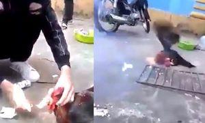 Truy tìm thanh niên Việt đốt pháo trong miệng gà trống