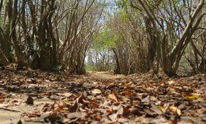 Dị nhân giữa rừng và chuyện ngôi miếu thiêng trong rừng Rú Chá
