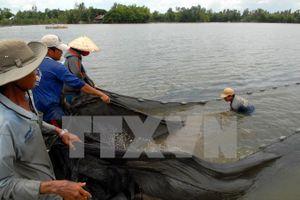 Quảng Nam: Một người thiệt mạng do dùng mìn tự chế để đánh cá