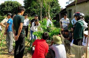 Thích ứng biến đổi khí hậu nhờ giữ rừng và phát triển nông lâm kết hợp