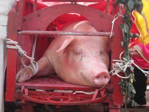 Làng Ném Thượng chém lợn trong nhà kín