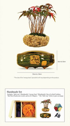 Từ Air bonsai nghĩ về hoa tết Việt