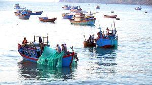 Ngư dân Nhơn Lý trúng đậm tôm hùm giống