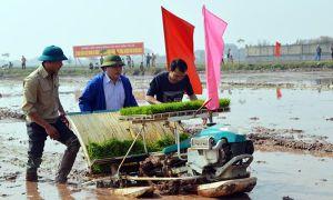 Bí thư và Chủ tịch Hà Nội xuống đồng đi cấy cùng nông dân