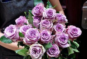 250.000 đồng một cành hoa hồng dài 1,6m ngày Valentine