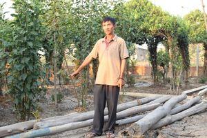 Vụ chủ đất 'Xin Chào' xây chòi vịt: Không đủ căn cứ khởi tố