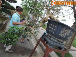 Choáng váng dàn cây cảnh giá khủng đổ về Hà Nội