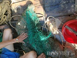 Công an vây bắt, tóm gọn cá sấu trên sông Soài Rạp