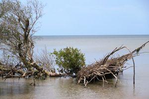 Mỗi năm, Cà Mau mất 450 ha đất ven biển do sạt lở