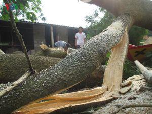 Chùm ảnh: Mưa đá, lốc xoáy càn quét trên diện rộng tại Hà Tĩnh