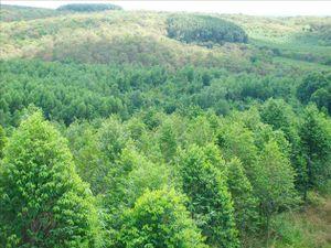 Diện tích cây ca cao cả nước tăng lên 50.000ha vào năm 2020