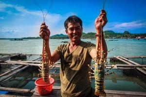 Ghé thăm những hòn đảo này để thưởng thức tôm hùm 'ngon, bổ, rẻ'