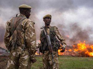 Nguyên nhân nào khiến Kenya tiêu hủy 105 tấn ngà voi?