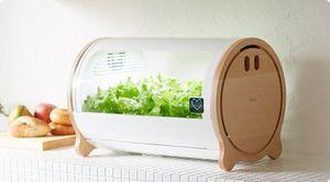 Cách trồng rau sạch siêu bá đạo của người Nhật